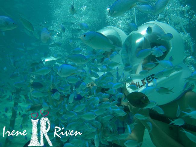 壁纸 海底 海底世界 海洋馆 水族馆 桌面 650_488